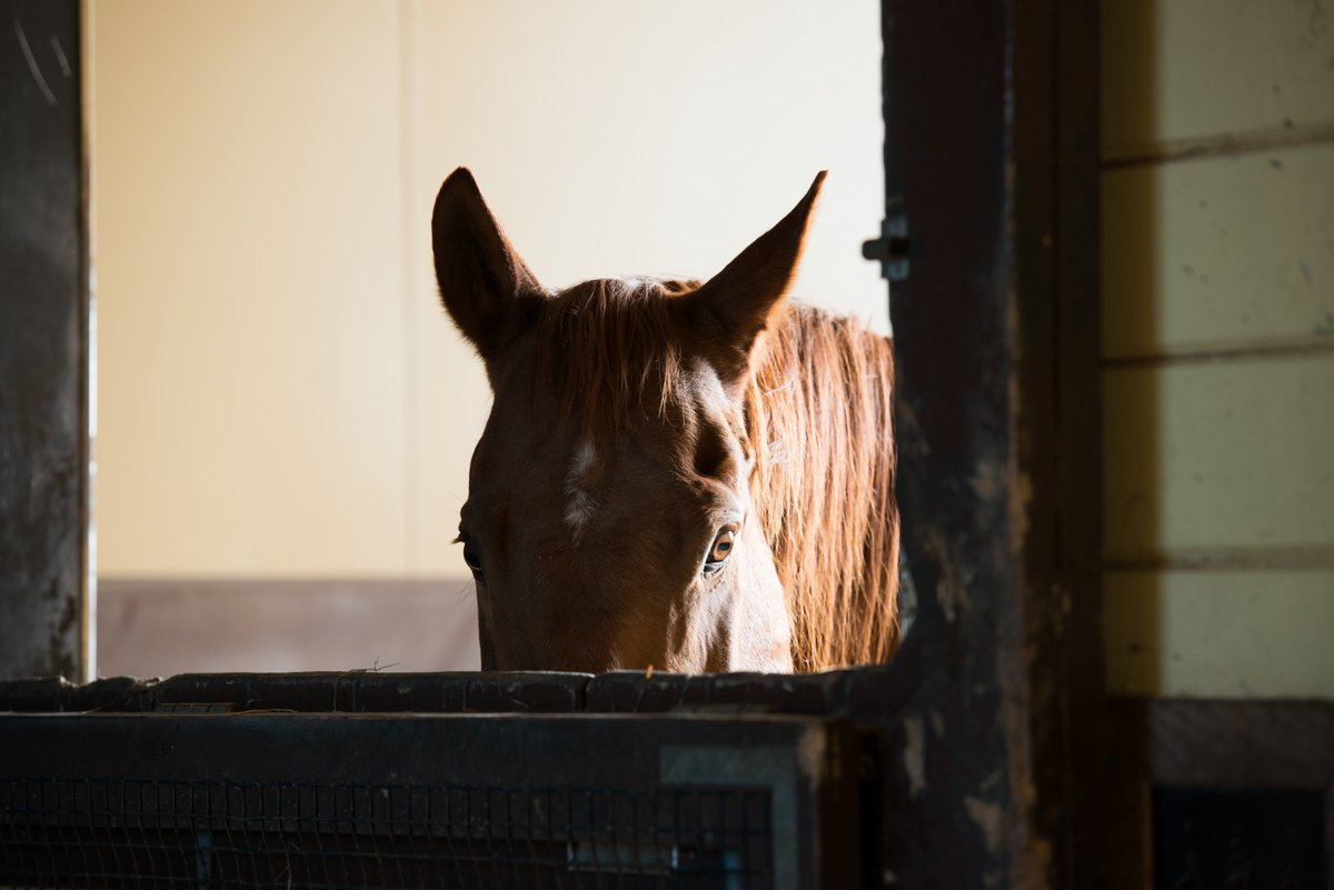 Providing refuge, rehabilitation, and placement for abused and neglected Maine horses.