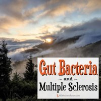 Gut Bacteria and MS