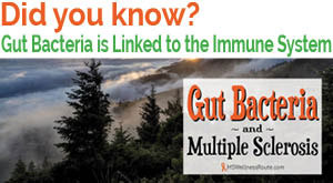Gut bacteria is linked to the immune system.