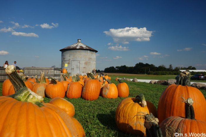 pumpkin-at-beasleys-orchard-danville-indiana
