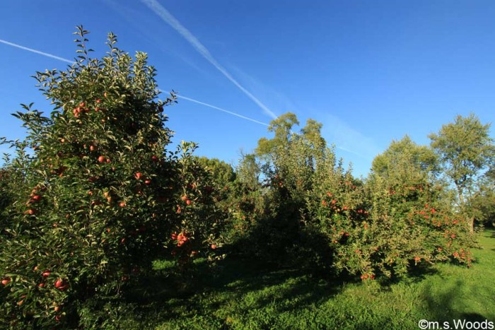 adrian-orchards-greenwood-indiana