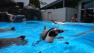 鳥羽水族館にいたペンギン