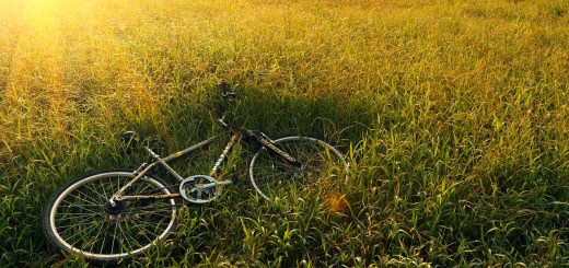 Bike in der Wiese