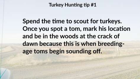 Turkey tip 1