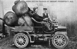 Turnip Postcard