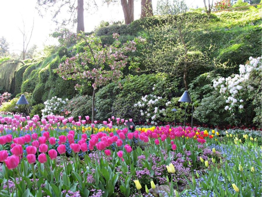 сады Бучарт, Виктория