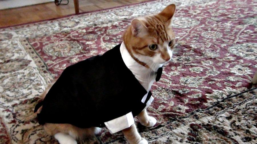животные в канаде, кот