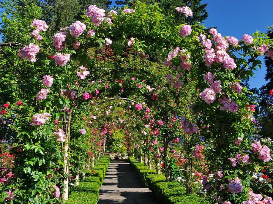 Бучарт сады летом