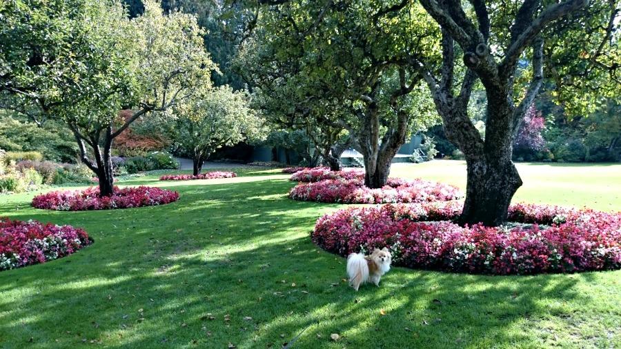 осень в Виктории