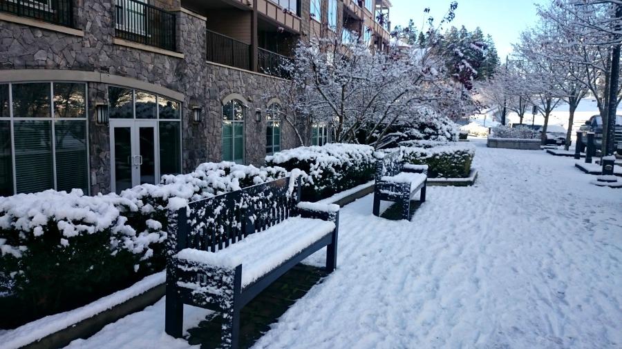 зима в Виктории, остров Ванкувер
