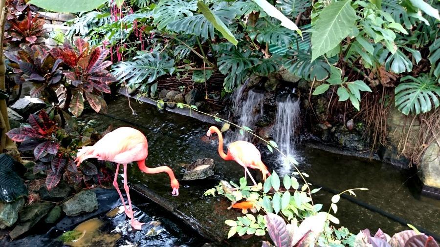 фламинго на острове Ванкувер