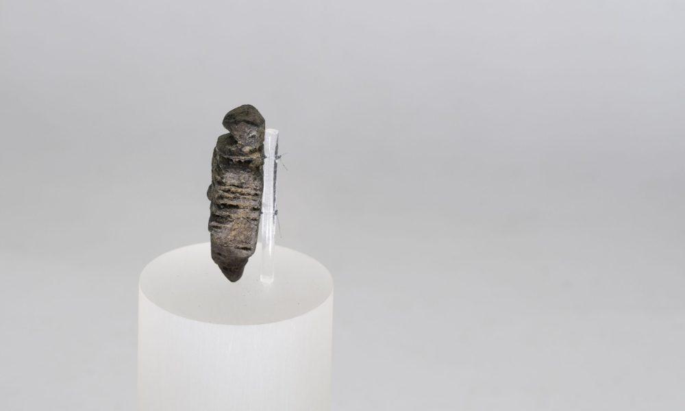 Archeolgia