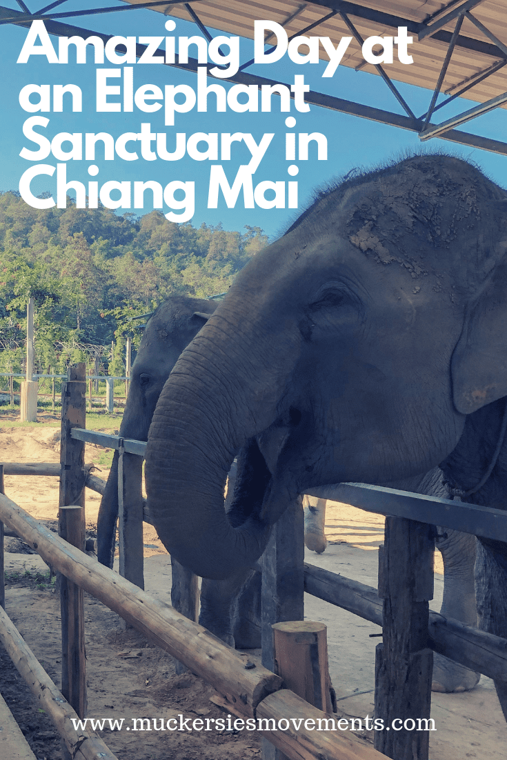 My Day Trip to the Elephant Jungle Sanctuary
