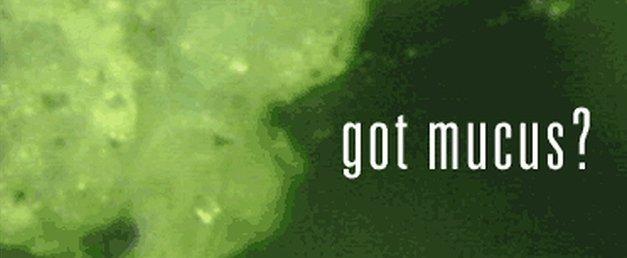 get rid of mucus