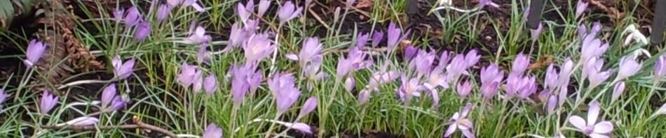 cropped-Early-Spring-Header1.jpg