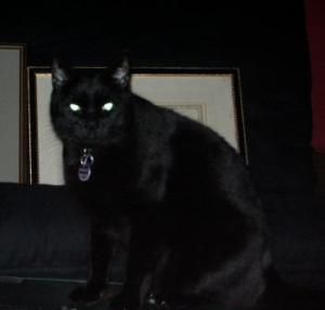 A black cat with glowing green eyes.