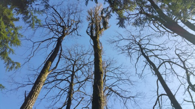 A group of trees as seen from below