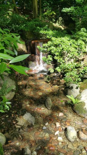 A two foot waterfall into a small natural pool, surrounded by lush greenery.