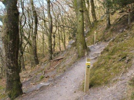 Nature Trail / Llwybr Natur - Padarn Country Park Walk