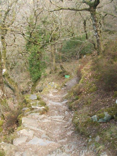 Woodland Walk - Taith y Goedwig - Padarn Country Park