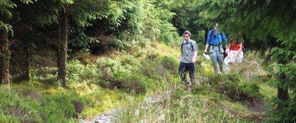 Nercwys Forest and Bryn Alyn