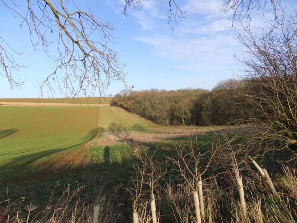 wolds_52_960