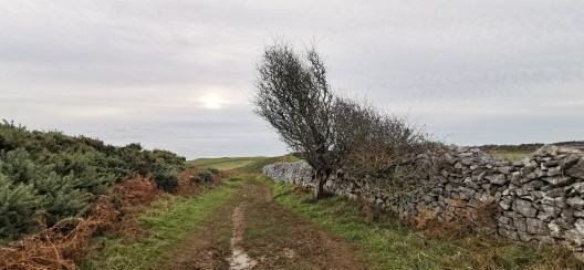 Rhossili Bay and Headland Walk 6.2