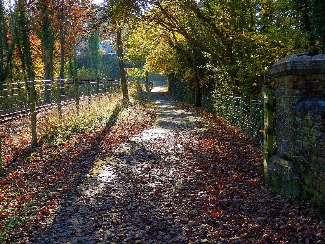 Autumn, reviews 029