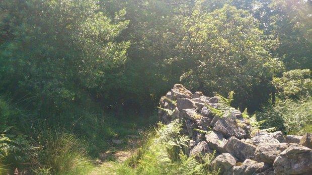 peris_padarn_trail_run005