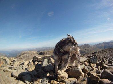How to take your dog mountain walking