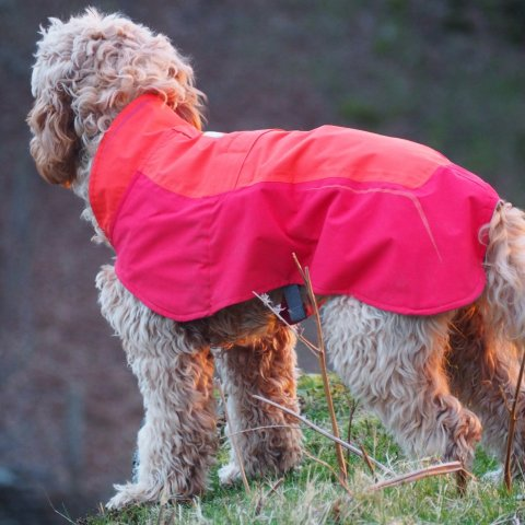 Ruffwear Vert dog jacket Review