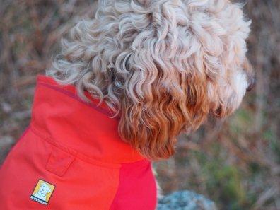 Ruffwear Vert dog jacket Review