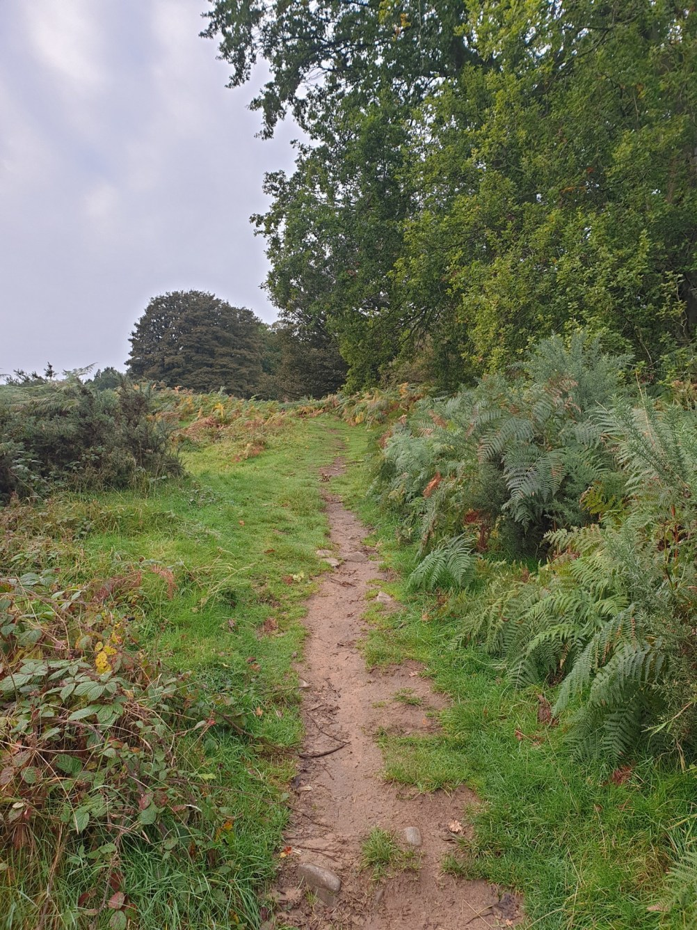 Brown_Clee_Hill_4