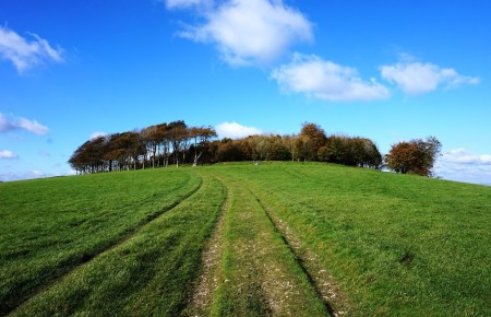 Chanctonbury Ring and Cissbury Ring Walk from Finden