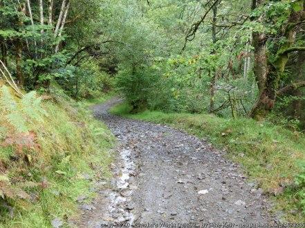Glyndwr's Way in Dyfnant Forest