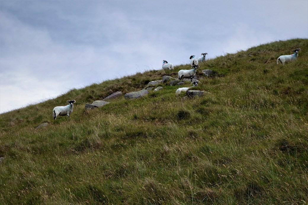 9.0 Walk up Cratlieve - Dromara Hills