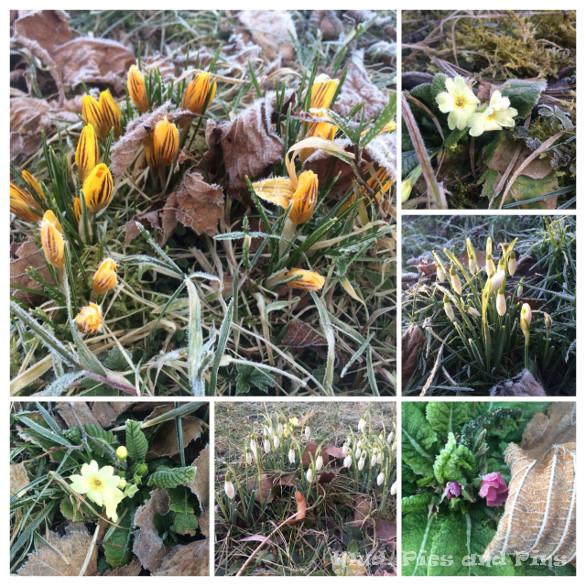 Spring floweres | Mud, Pies and Pins