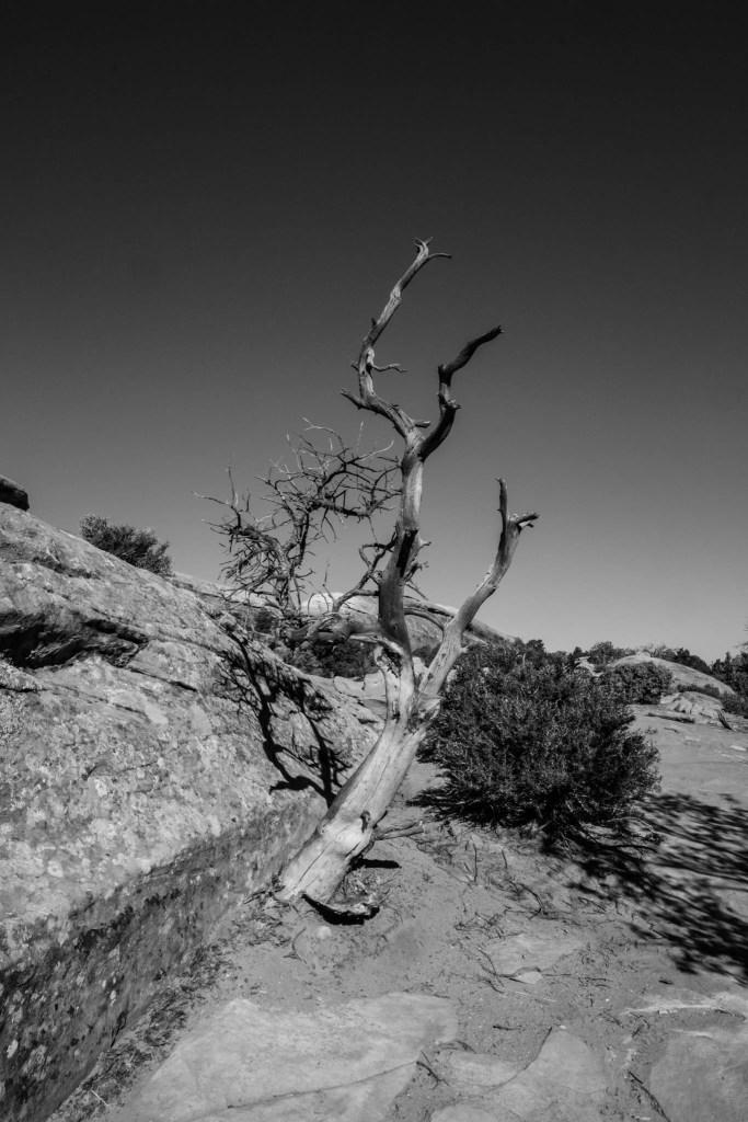 Arches Nationalpark, BW, USA, Utah