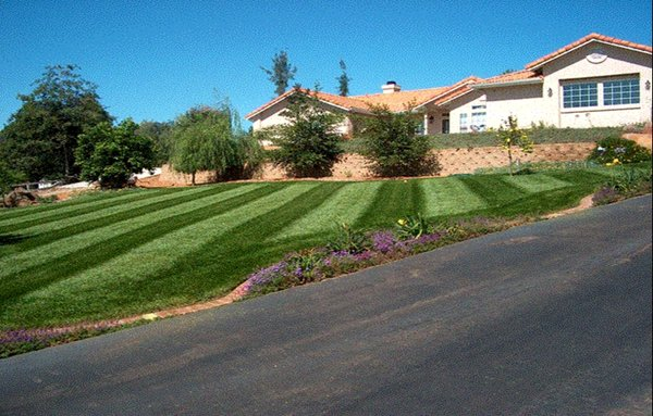 alpine lawn service - basic package