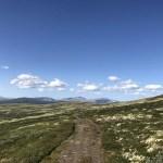Olavsweg Norwegen Dovrefjell