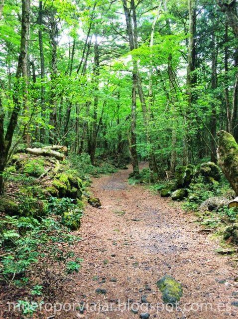 Camino interno del bosque de los suicidios - Aokigahara