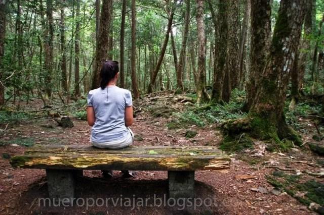 El bosque de los suicidios - Aokigahara