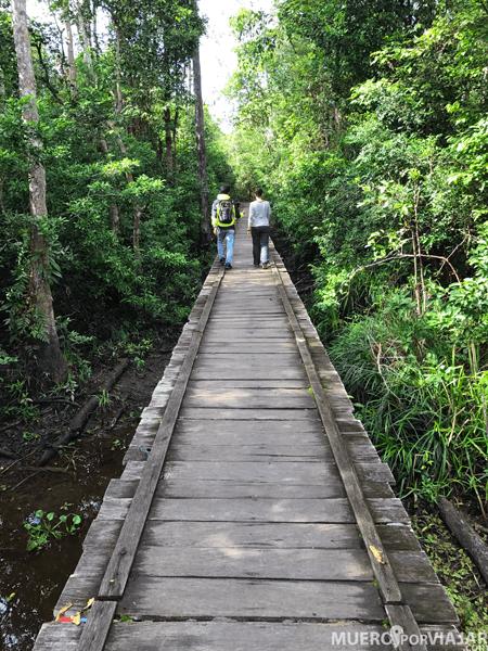 Los caminos hacia las plataformas son preciosos, rodeados de vegetación salvaje