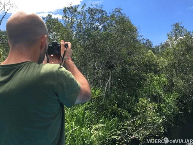 De Camino al segundo campamento también pudimos ver Narigudos en los arboles del borde del río