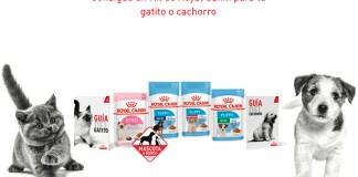 Gratis un kit de Royal Canin para tu gatito o cachorro