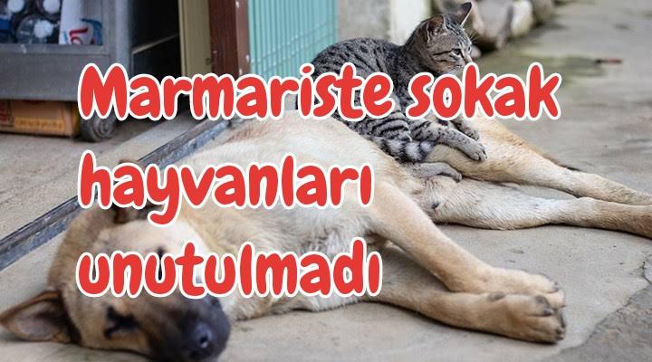 Marmaris Sokak Hayvanlarını Unutmadı