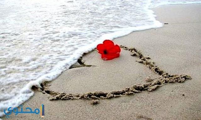 صور ورد رومانسي على البحر