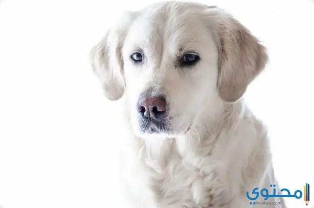 معنى حلم الكلب في المنام موقع محتوى