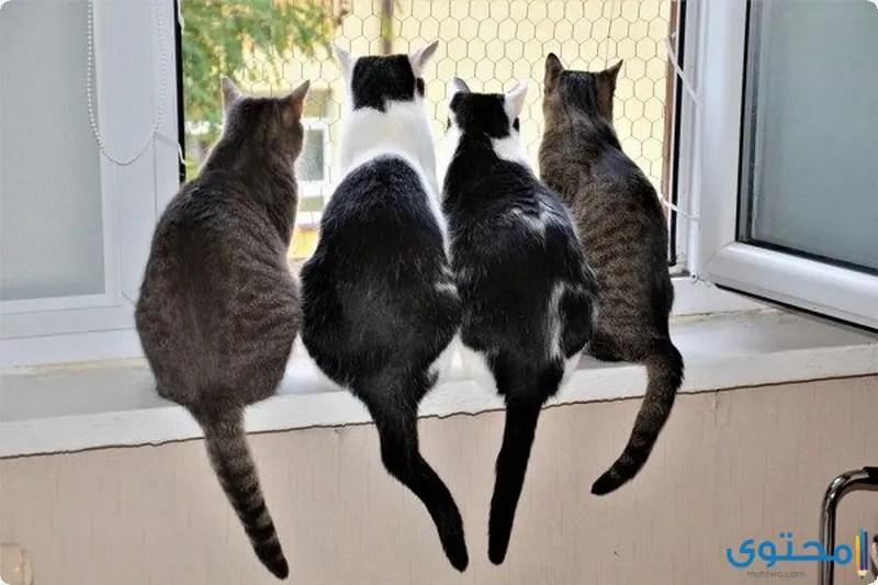 رؤية القطط في المنام للمتزوجة موقع محتوى