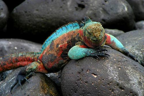 Islas-Galápagos:-El-paraíso-del-que-muchos-hablan-pero-pocos-conocen
